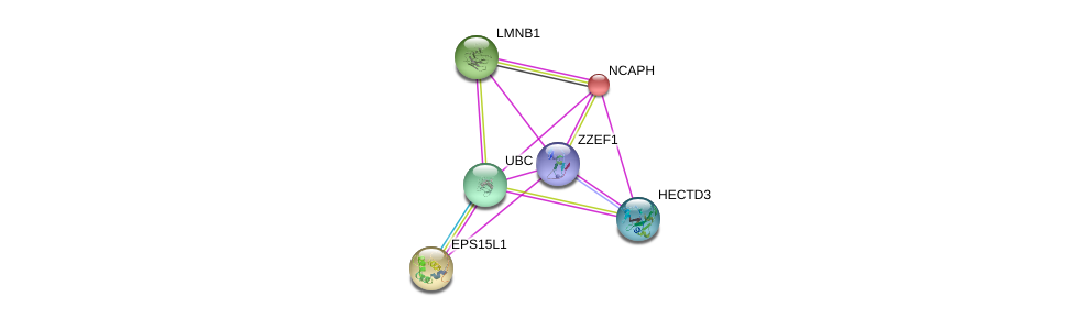 http://string-db.org/version_10/api/image/networkList?limit=0&targetmode=proteins&caller_identity=gene_cards&network_flavor=evidence&identifiers=9606.ENSP00000371051%0d%0a9606.ENSP00000344818%0d%0a9606.ENSP00000240423%0d%0a9606.ENSP00000361245%0d%0a9606.ENSP00000261366%0d%0a9606.ENSP00000248070%0d%0a