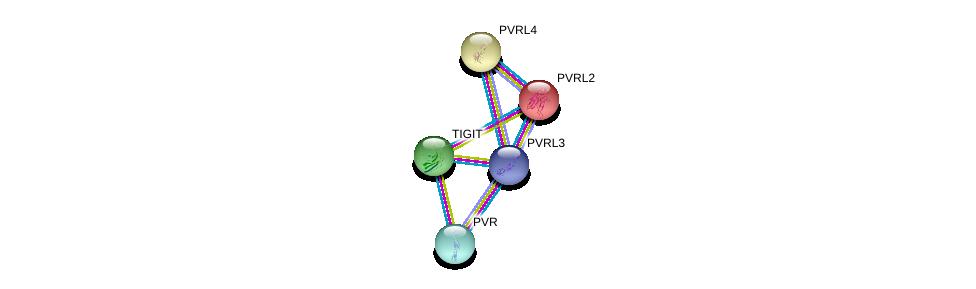 http://string-db.org/version_10/api/image/networkList?limit=0&targetmode=proteins&caller_identity=gene_cards&network_flavor=evidence&identifiers=9606.ENSP00000373167%0d%0a9606.ENSP00000402060%0d%0a9606.ENSP00000252483%0d%0a9606.ENSP00000356991%0d%0a9606.ENSP00000418070%0d%0a