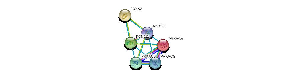 http://string-db.org/version_10/api/image/networkList?limit=0&targetmode=proteins&caller_identity=gene_cards&network_flavor=evidence&identifiers=9606.ENSP00000374467%0d%0a9606.ENSP00000345708%0d%0a9606.ENSP00000309591%0d%0a9606.ENSP00000315955%0d%0a9606.ENSP00000359719%0d%0a9606.ENSP00000366488%0d%0a