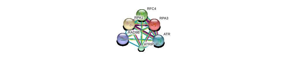 http://string-db.org/version_10/api/image/networkList?limit=0&targetmode=proteins&caller_identity=gene_cards&network_flavor=evidence&identifiers=9606.ENSP00000376440%0d%0a9606.ENSP00000223129%0d%0a9606.ENSP00000254719%0d%0a9606.ENSP00000296273%0d%0a9606.ENSP00000323099%0d%0a9606.ENSP00000343741%0d%0a
