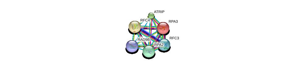 http://string-db.org/version_10/api/image/networkList?limit=0&targetmode=proteins&caller_identity=gene_cards&network_flavor=evidence&identifiers=9606.ENSP00000376440%0d%0a9606.ENSP00000223129%0d%0a9606.ENSP00000296273%0d%0a9606.ENSP00000323099%0d%0a9606.ENSP00000363021%0d%0a9606.ENSP00000369411%0d%0a