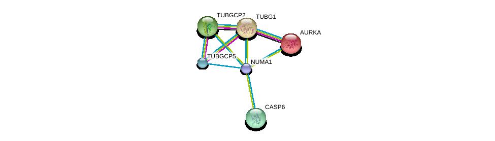 http://string-db.org/version_10/api/image/networkList?limit=0&targetmode=proteins&caller_identity=gene_cards&network_flavor=evidence&identifiers=9606.ENSP00000377298%0d%0a9606.ENSP00000216911%0d%0a9606.ENSP00000251413%0d%0a9606.ENSP00000252936%0d%0a9606.ENSP00000265164%0d%0a9606.ENSP00000283645%0d%0a