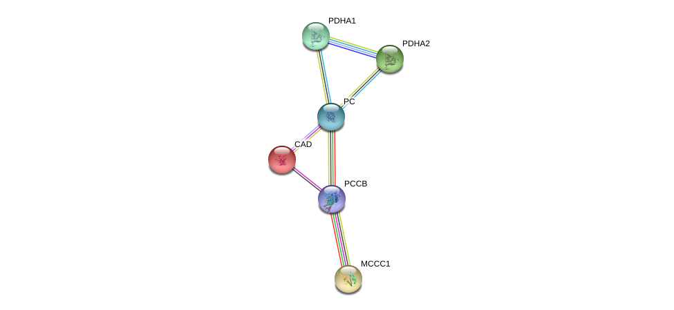 http://string-db.org/version_10/api/image/networkList?limit=0&targetmode=proteins&caller_identity=gene_cards&network_flavor=evidence&identifiers=9606.ENSP00000377527%0d%0a9606.ENSP00000264705%0d%0a9606.ENSP00000369134%0d%0a9606.ENSP00000419027%0d%0a9606.ENSP00000265594%0d%0a9606.ENSP00000295266%0d%0a