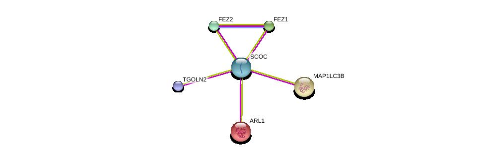http://string-db.org/version_10/api/image/networkList?limit=0&targetmode=proteins&caller_identity=gene_cards&network_flavor=evidence&identifiers=9606.ENSP00000377751%0d%0a9606.ENSP00000278919%0d%0a9606.ENSP00000368547%0d%0a9606.ENSP00000261636%0d%0a9606.ENSP00000268607%0d%0a9606.ENSP00000386443%0d%0a