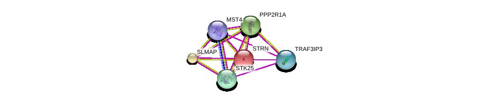 http://string-db.org/version_10/api/image/networkList?limit=0&targetmode=proteins&caller_identity=gene_cards&network_flavor=evidence&identifiers=9606.ENSP00000377867%0d%0a9606.ENSP00000295951%0d%0a9606.ENSP00000324804%0d%0a9606.ENSP00000325748%0d%0a9606.ENSP00000263918%0d%0a9606.ENSP00000355991%0d%0a