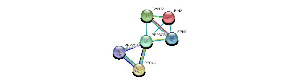 http://string-db.org/version_10/api/image/networkList?limit=0&targetmode=proteins&caller_identity=gene_cards&network_flavor=evidence&identifiers=9606.ENSP00000378306%0d%0a9606.ENSP00000418447%0d%0a9606.ENSP00000347792%0d%0a9606.ENSP00000406209%0d%0a9606.ENSP00000279387%0d%0a9606.ENSP00000267012%0d%0a