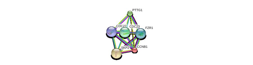 http://string-db.org/version_10/api/image/networkList?limit=0&targetmode=proteins&caller_identity=gene_cards&network_flavor=evidence&identifiers=9606.ENSP00000378529%0d%0a9606.ENSP00000256442%0d%0a9606.ENSP00000434614%0d%0a9606.ENSP00000344936%0d%0a9606.ENSP00000274255%0d%0a9606.ENSP00000378350%0d%0a