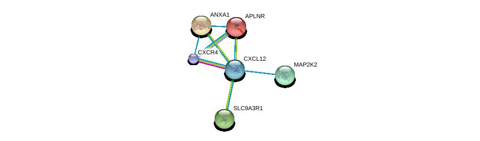 http://string-db.org/version_10/api/image/networkList?limit=0&targetmode=proteins&caller_identity=gene_cards&network_flavor=evidence&identifiers=9606.ENSP00000379140%0d%0a9606.ENSP00000386884%0d%0a9606.ENSP00000262613%0d%0a9606.ENSP00000257497%0d%0a9606.ENSP00000262948%0d%0a9606.ENSP00000257254%0d%0a