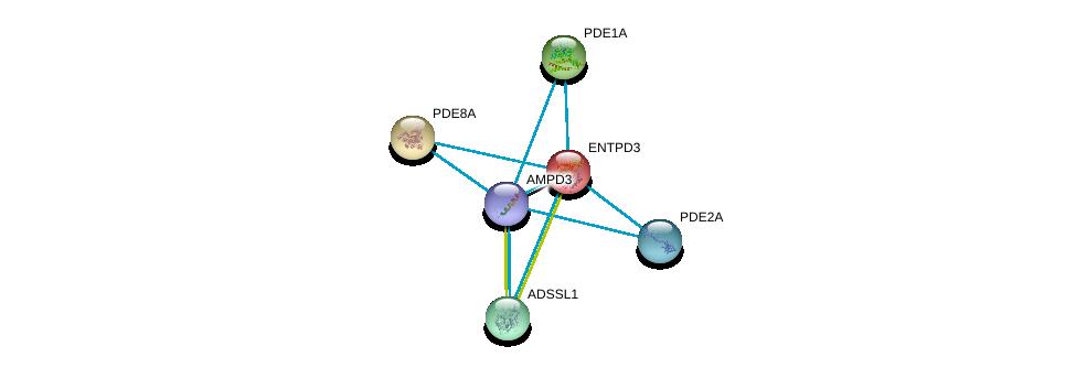 http://string-db.org/version_10/api/image/networkList?limit=0&targetmode=proteins&caller_identity=gene_cards&network_flavor=evidence&identifiers=9606.ENSP00000379802%0d%0a9606.ENSP00000331574%0d%0a9606.ENSP00000333019%0d%0a9606.ENSP00000311453%0d%0a9606.ENSP00000334910%0d%0a9606.ENSP00000301825%0d%0a