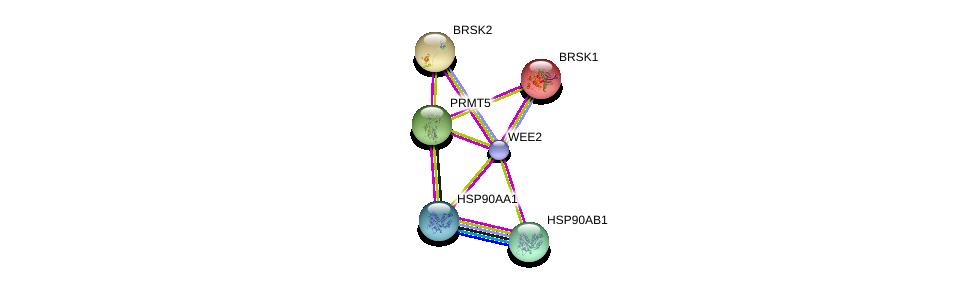 http://string-db.org/version_10/api/image/networkList?limit=0&targetmode=proteins&caller_identity=gene_cards&network_flavor=evidence&identifiers=9606.ENSP00000380675%0d%0a9606.ENSP00000335153%0d%0a9606.ENSP00000325875%0d%0a9606.ENSP00000319169%0d%0a9606.ENSP00000310697%0d%0a9606.ENSP00000310649%0d%0a