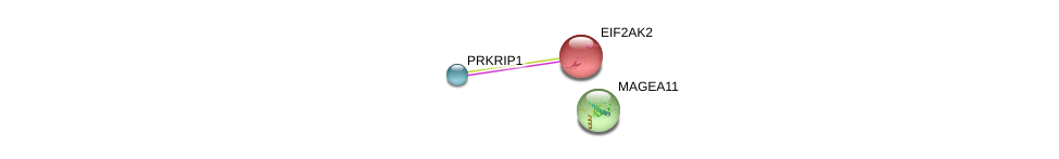 http://string-db.org/version_10/api/image/networkList?limit=0&targetmode=proteins&caller_identity=gene_cards&network_flavor=evidence&identifiers=9606.ENSP00000381010%0d%0a9606.ENSP00000233057%0d%0a9606.ENSP00000347358%0d%0a