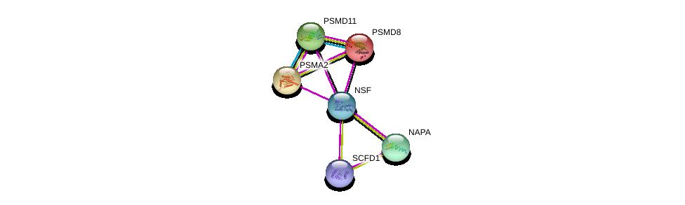 http://string-db.org/version_10/api/image/networkList?limit=0&targetmode=proteins&caller_identity=gene_cards&network_flavor=evidence&identifiers=9606.ENSP00000381293%0d%0a9606.ENSP00000263354%0d%0a9606.ENSP00000223321%0d%0a9606.ENSP00000390783%0d%0a9606.ENSP00000261712%0d%0a9606.ENSP00000215071%0d%0a