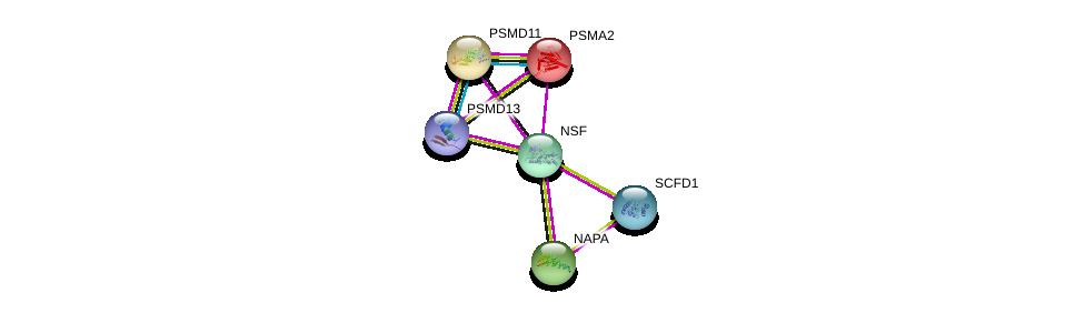 http://string-db.org/version_10/api/image/networkList?limit=0&targetmode=proteins&caller_identity=gene_cards&network_flavor=evidence&identifiers=9606.ENSP00000381293%0d%0a9606.ENSP00000263354%0d%0a9606.ENSP00000223321%0d%0a9606.ENSP00000390783%0d%0a9606.ENSP00000396937%0d%0a9606.ENSP00000261712%0d%0a