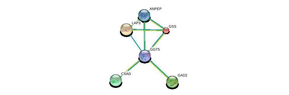 http://string-db.org/version_10/api/image/networkList?limit=0&targetmode=proteins&caller_identity=gene_cards&network_flavor=evidence&identifiers=9606.ENSP00000381340%0d%0a9606.ENSP00000300060%0d%0a9606.ENSP00000216951%0d%0a9606.ENSP00000226299%0d%0a9606.ENSP00000259271%0d%0a9606.ENSP00000267085%0d%0a