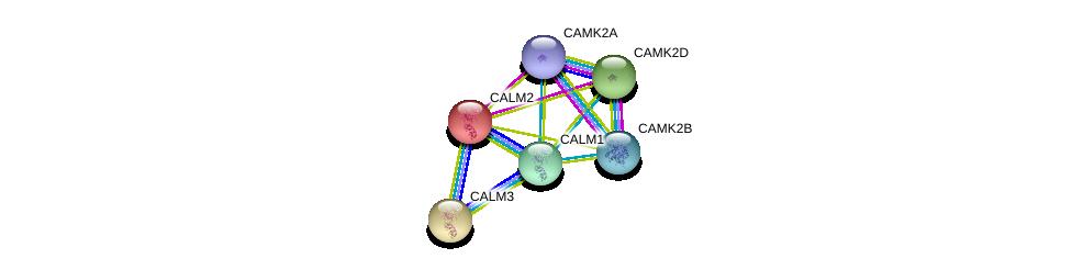 http://string-db.org/version_10/api/image/networkList?limit=0&targetmode=proteins&caller_identity=gene_cards&network_flavor=evidence&identifiers=9606.ENSP00000381412%0d%0a9606.ENSP00000272298%0d%0a9606.ENSP00000339740%0d%0a9606.ENSP00000379098%0d%0a9606.ENSP00000291295%0d%0a9606.ENSP00000349467%0d%0a