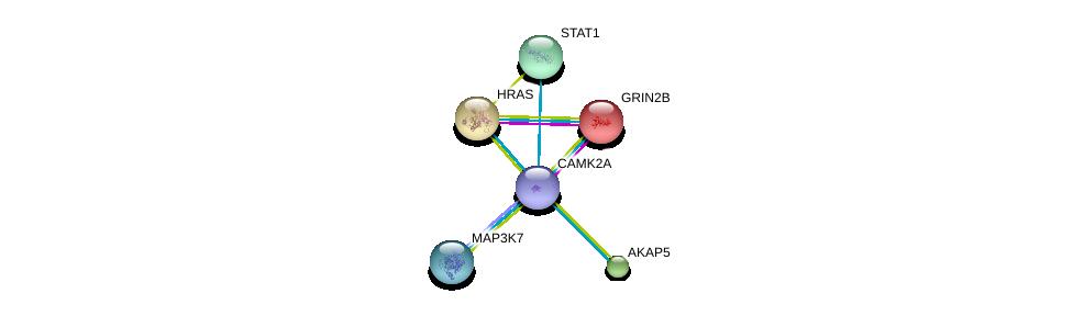 http://string-db.org/version_10/api/image/networkList?limit=0&targetmode=proteins&caller_identity=gene_cards&network_flavor=evidence&identifiers=9606.ENSP00000381412%0d%0a9606.ENSP00000279593%0d%0a9606.ENSP00000315615%0d%0a9606.ENSP00000358335%0d%0a9606.ENSP00000309845%0d%0a9606.ENSP00000354394%0d%0a