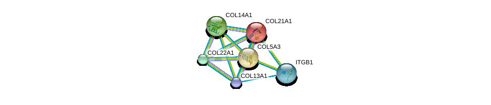 http://string-db.org/version_10/api/image/networkList?limit=0&targetmode=proteins&caller_identity=gene_cards&network_flavor=evidence&identifiers=9606.ENSP00000381949%0d%0a9606.ENSP00000244728%0d%0a9606.ENSP00000264828%0d%0a9606.ENSP00000297848%0d%0a9606.ENSP00000303153%0d%0a9606.ENSP00000303351%0d%0a