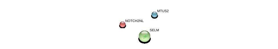 http://string-db.org/version_10/api/image/networkList?limit=0&targetmode=proteins&caller_identity=gene_cards&network_flavor=evidence&identifiers=9606.ENSP00000383155%0d%0a9606.ENSP00000392057%0d%0a9606.ENSP00000354929%0d%0a