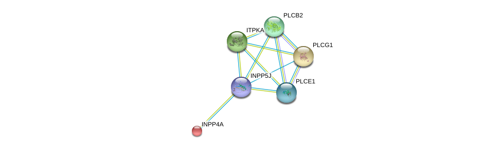 http://string-db.org/version_10/api/image/networkList?limit=0&targetmode=proteins&caller_identity=gene_cards&network_flavor=evidence&identifiers=9606.ENSP00000384534%0d%0a9606.ENSP00000074304%0d%0a9606.ENSP00000244007%0d%0a9606.ENSP00000260386%0d%0a9606.ENSP00000260402%0d%0a9606.ENSP00000260766%0d%0a