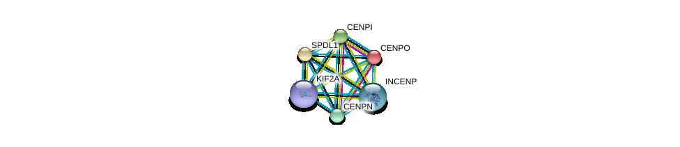 http://string-db.org/version_10/api/image/networkList?limit=0&targetmode=proteins&caller_identity=gene_cards&network_flavor=evidence&identifiers=9606.ENSP00000385000%0d%0a9606.ENSP00000378295%0d%0a9606.ENSP00000362018%0d%0a9606.ENSP00000377007%0d%0a9606.ENSP00000265295%0d%0a9606.ENSP00000260662%0d%0a