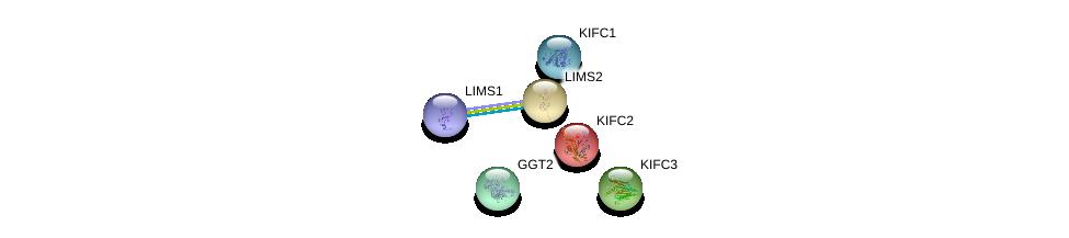 http://string-db.org/version_10/api/image/networkList?limit=0&targetmode=proteins&caller_identity=gene_cards&network_flavor=evidence&identifiers=9606.ENSP00000385721%0d%0a9606.ENSP00000301332%0d%0a9606.ENSP00000368976%0d%0a9606.ENSP00000393963%0d%0a9606.ENSP00000326888%0d%0a9606.ENSP00000446121%0d%0a