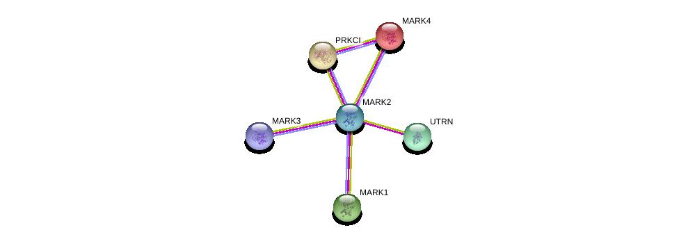 http://string-db.org/version_10/api/image/networkList?limit=0&targetmode=proteins&caller_identity=gene_cards&network_flavor=evidence&identifiers=9606.ENSP00000385751%0d%0a9606.ENSP00000262891%0d%0a9606.ENSP00000295797%0d%0a9606.ENSP00000411397%0d%0a9606.ENSP00000355884%0d%0a9606.ENSP00000356515%0d%0a