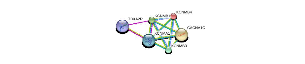 http://string-db.org/version_10/api/image/networkList?limit=0&targetmode=proteins&caller_identity=gene_cards&network_flavor=evidence&identifiers=9606.ENSP00000385806%0d%0a9606.ENSP00000319370%0d%0a9606.ENSP00000258111%0d%0a9606.ENSP00000393333%0d%0a9606.ENSP00000274629%0d%0a9606.ENSP00000266376%0d%0a