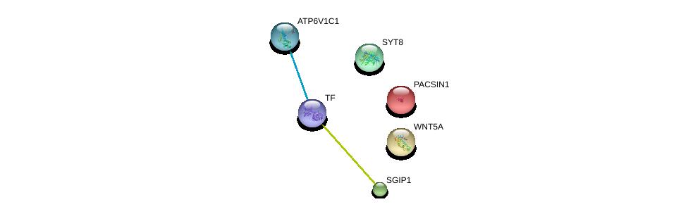 http://string-db.org/version_10/api/image/networkList?limit=0&targetmode=proteins&caller_identity=gene_cards&network_flavor=evidence&identifiers=9606.ENSP00000385834%0d%0a9606.ENSP00000244458%0d%0a9606.ENSP00000379203%0d%0a9606.ENSP00000264634%0d%0a9606.ENSP00000360076%0d%0a9606.ENSP00000371394%0d%0a