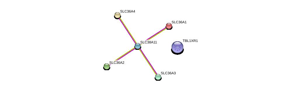 http://string-db.org/version_10/api/image/networkList?limit=0&targetmode=proteins&caller_identity=gene_cards&network_flavor=evidence&identifiers=9606.ENSP00000386272%0d%0a9606.ENSP00000405574%0d%0a9606.ENSP00000366942%0d%0a9606.ENSP00000334223%0d%0a9606.ENSP00000317382%0d%0a9606.ENSP00000243389%0d%0a