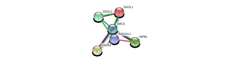 http://string-db.org/version_10/api/image/networkList?limit=0&targetmode=proteins&caller_identity=gene_cards&network_flavor=evidence&identifiers=9606.ENSP00000386414%0d%0a9606.ENSP00000354720%0d%0a9606.ENSP00000282516%0d%0a9606.ENSP00000265335%0d%0a9606.ENSP00000263753%0d%0a9606.ENSP00000350447%0d%0a