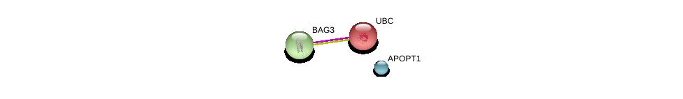 http://string-db.org/version_10/api/image/networkList?limit=0&targetmode=proteins&caller_identity=gene_cards&network_flavor=evidence&identifiers=9606.ENSP00000386485%0d%0a9606.ENSP00000358081%0d%0a9606.ENSP00000344818%0d%0a