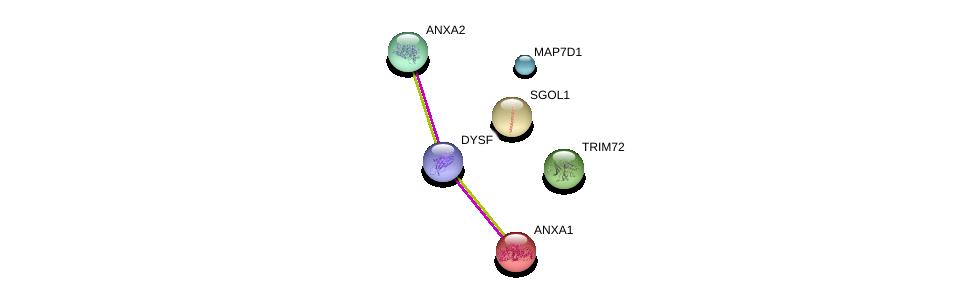 http://string-db.org/version_10/api/image/networkList?limit=0&targetmode=proteins&caller_identity=gene_cards&network_flavor=evidence&identifiers=9606.ENSP00000386881%0d%0a9606.ENSP00000312675%0d%0a9606.ENSP00000362244%0d%0a9606.ENSP00000263753%0d%0a9606.ENSP00000346032%0d%0a9606.ENSP00000257497%0d%0a