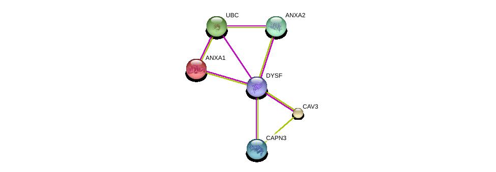 http://string-db.org/version_10/api/image/networkList?limit=0&targetmode=proteins&caller_identity=gene_cards&network_flavor=evidence&identifiers=9606.ENSP00000386881%0d%0a9606.ENSP00000380349%0d%0a9606.ENSP00000346032%0d%0a9606.ENSP00000341940%0d%0a9606.ENSP00000257497%0d%0a9606.ENSP00000344818%0d%0a