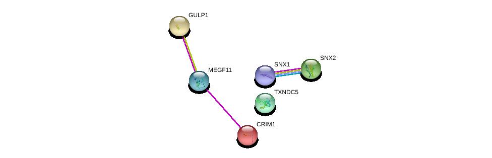 http://string-db.org/version_10/api/image/networkList?limit=0&targetmode=proteins&caller_identity=gene_cards&network_flavor=evidence&identifiers=9606.ENSP00000386908%0d%0a9606.ENSP00000280527%0d%0a9606.ENSP00000369081%0d%0a9606.ENSP00000352047%0d%0a9606.ENSP00000368831%0d%0a9606.ENSP00000453785%0d%0a