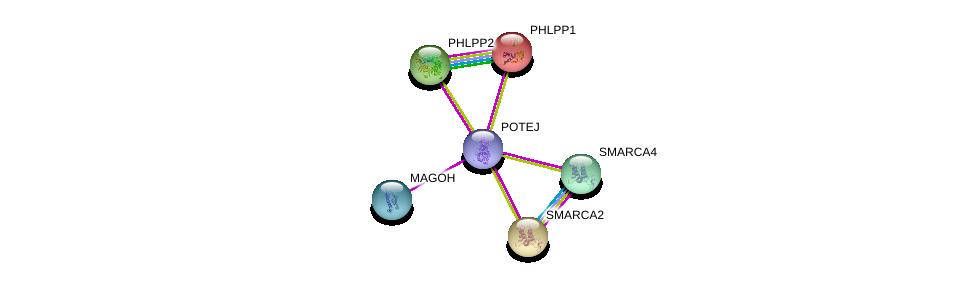 http://string-db.org/version_10/api/image/networkList?limit=0&targetmode=proteins&caller_identity=gene_cards&network_flavor=evidence&identifiers=9606.ENSP00000387176%0d%0a9606.ENSP00000360525%0d%0a9606.ENSP00000348611%0d%0a9606.ENSP00000262719%0d%0a9606.ENSP00000265773%0d%0a9606.ENSP00000350720%0d%0a