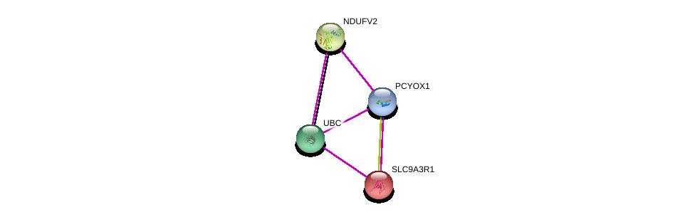 http://string-db.org/version_10/api/image/networkList?limit=0&targetmode=proteins&caller_identity=gene_cards&network_flavor=evidence&identifiers=9606.ENSP00000387654%0d%0a9606.ENSP00000344818%0d%0a9606.ENSP00000327268%0d%0a9606.ENSP00000262613%0d%0a