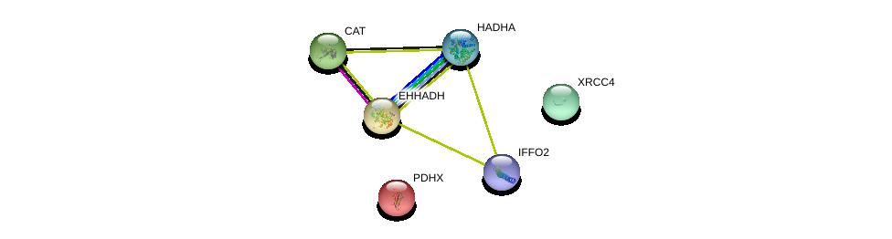 http://string-db.org/version_10/api/image/networkList?limit=0&targetmode=proteins&caller_identity=gene_cards&network_flavor=evidence&identifiers=9606.ENSP00000387941%0d%0a9606.ENSP00000342011%0d%0a9606.ENSP00000231887%0d%0a9606.ENSP00000370023%0d%0a9606.ENSP00000241052%0d%0a9606.ENSP00000227868%0d%0a