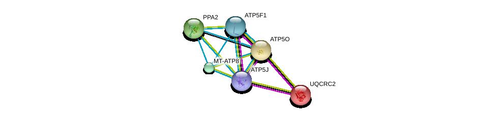 http://string-db.org/version_10/api/image/networkList?limit=0&targetmode=proteins&caller_identity=gene_cards&network_flavor=evidence&identifiers=9606.ENSP00000389649%0d%0a9606.ENSP00000358737%0d%0a9606.ENSP00000290299%0d%0a9606.ENSP00000268379%0d%0a9606.ENSP00000355265%0d%0a9606.ENSP00000343885%0d%0a