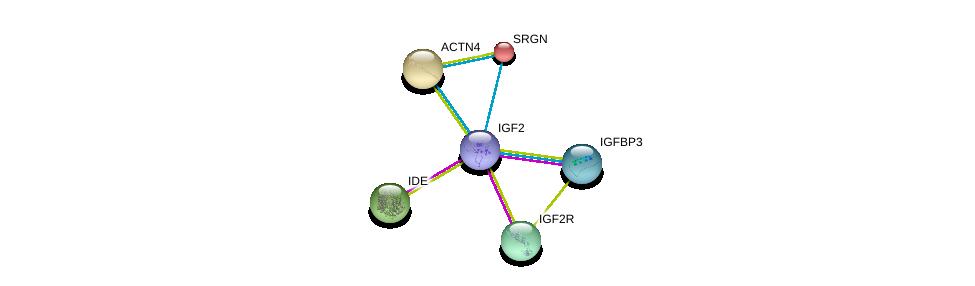 http://string-db.org/version_10/api/image/networkList?limit=0&targetmode=proteins&caller_identity=gene_cards&network_flavor=evidence&identifiers=9606.ENSP00000391826%0d%0a9606.ENSP00000370473%0d%0a9606.ENSP00000349437%0d%0a9606.ENSP00000265986%0d%0a9606.ENSP00000242465%0d%0a9606.ENSP00000252699%0d%0a