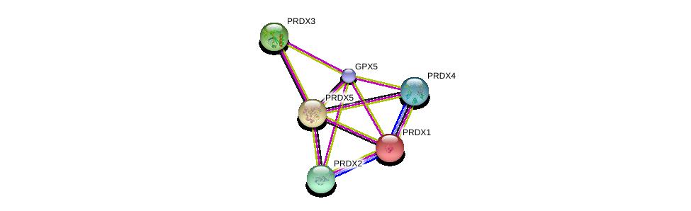 http://string-db.org/version_10/api/image/networkList?limit=0&targetmode=proteins&caller_identity=gene_cards&network_flavor=evidence&identifiers=9606.ENSP00000392398%0d%0a9606.ENSP00000262746%0d%0a9606.ENSP00000298510%0d%0a9606.ENSP00000301522%0d%0a9606.ENSP00000368646%0d%0a9606.ENSP00000265462%0d%0a