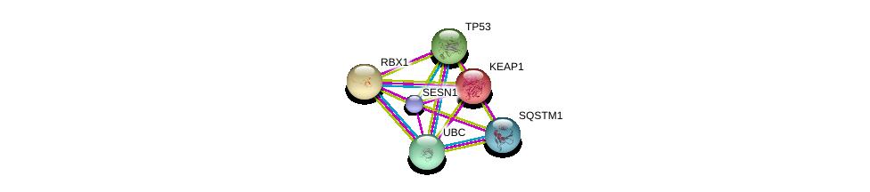 http://string-db.org/version_10/api/image/networkList?limit=0&targetmode=proteins&caller_identity=gene_cards&network_flavor=evidence&identifiers=9606.ENSP00000393762%0d%0a9606.ENSP00000269305%0d%0a9606.ENSP00000344818%0d%0a9606.ENSP00000171111%0d%0a9606.ENSP00000216225%0d%0a9606.ENSP00000374455%0d%0a