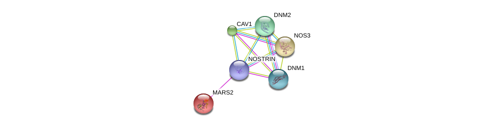 http://string-db.org/version_10/api/image/networkList?limit=0&targetmode=proteins&caller_identity=gene_cards&network_flavor=evidence&identifiers=9606.ENSP00000394051%0d%0a9606.ENSP00000347890%0d%0a9606.ENSP00000339191%0d%0a9606.ENSP00000297494%0d%0a9606.ENSP00000282276%0d%0a9606.ENSP00000362014%0d%0a