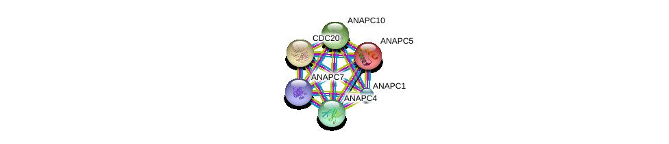 http://string-db.org/version_10/api/image/networkList?limit=0&targetmode=proteins&caller_identity=gene_cards&network_flavor=evidence&identifiers=9606.ENSP00000394394%0d%0a9606.ENSP00000261819%0d%0a9606.ENSP00000318775%0d%0a9606.ENSP00000308450%0d%0a9606.ENSP00000310071%0d%0a9606.ENSP00000339109%0d%0a