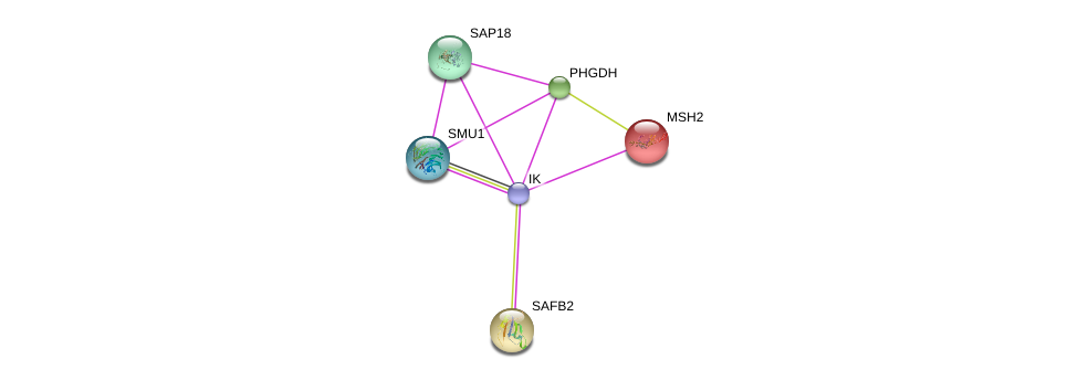 http://string-db.org/version_10/api/image/networkList?limit=0&targetmode=proteins&caller_identity=gene_cards&network_flavor=evidence&identifiers=9606.ENSP00000396301%0d%0a9606.ENSP00000380336%0d%0a9606.ENSP00000371973%0d%0a9606.ENSP00000233146%0d%0a9606.ENSP00000358417%0d%0a9606.ENSP00000252542%0d%0a