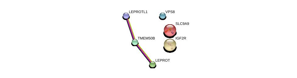 http://string-db.org/version_10/api/image/networkList?limit=0&targetmode=proteins&caller_identity=gene_cards&network_flavor=evidence&identifiers=9606.ENSP00000397773%0d%0a9606.ENSP00000360104%0d%0a9606.ENSP00000428281%0d%0a9606.ENSP00000349437%0d%0a9606.ENSP00000397879%0d%0a9606.ENSP00000320246%0d%0a