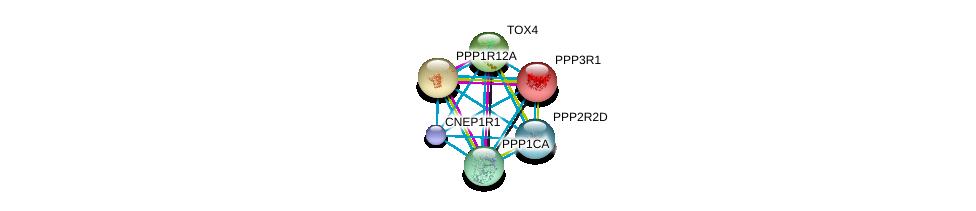 http://string-db.org/version_10/api/image/networkList?limit=0&targetmode=proteins&caller_identity=gene_cards&network_flavor=evidence&identifiers=9606.ENSP00000399970%0d%0a9606.ENSP00000234310%0d%0a9606.ENSP00000405635%0d%0a9606.ENSP00000261207%0d%0a9606.ENSP00000262709%0d%0a9606.ENSP00000326031%0d%0a