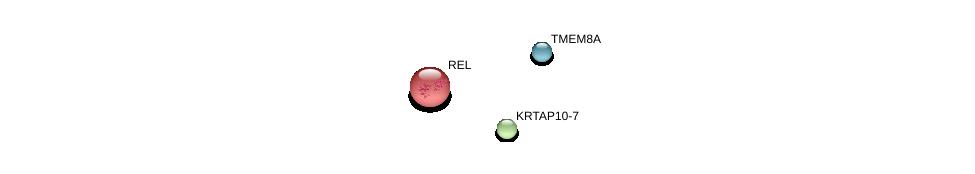 http://string-db.org/version_10/api/image/networkList?limit=0&targetmode=proteins&caller_identity=gene_cards&network_flavor=evidence&identifiers=9606.ENSP00000401338%0d%0a9606.ENSP00000295025%0d%0a9606.ENSP00000369445%0d%0a