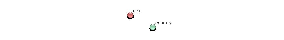 http://string-db.org/version_10/api/image/networkList?limit=0&targetmode=proteins&caller_identity=gene_cards&network_flavor=evidence&identifiers=9606.ENSP00000402239%0d%0a9606.ENSP00000240316%0d%0a
