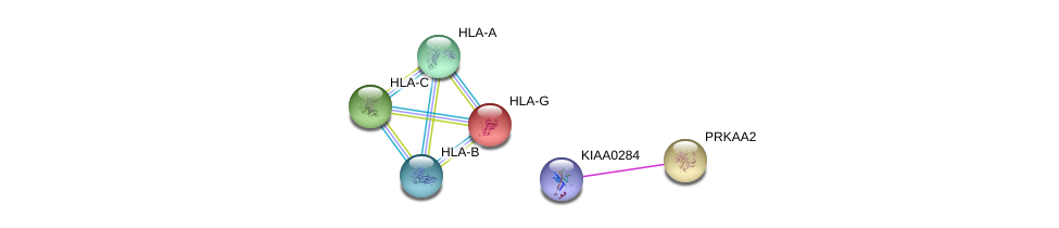 http://string-db.org/version_10/api/image/networkList?limit=0&targetmode=proteins&caller_identity=gene_cards&network_flavor=evidence&identifiers=9606.ENSP00000404151%0d%0a9606.ENSP00000360290%0d%0a9606.ENSP00000366005%0d%0a9606.ENSP00000399168%0d%0a9606.ENSP00000353472%0d%0a9606.ENSP00000365402%0d%0a