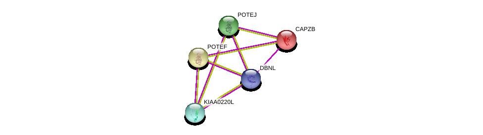 http://string-db.org/version_10/api/image/networkList?limit=0&targetmode=proteins&caller_identity=gene_cards&network_flavor=evidence&identifiers=9606.ENSP00000404439%0d%0a9606.ENSP00000264202%0d%0a9606.ENSP00000417653%0d%0a9606.ENSP00000417653%0d%0a9606.ENSP00000387176%0d%0a9606.ENSP00000350052%0d%0a